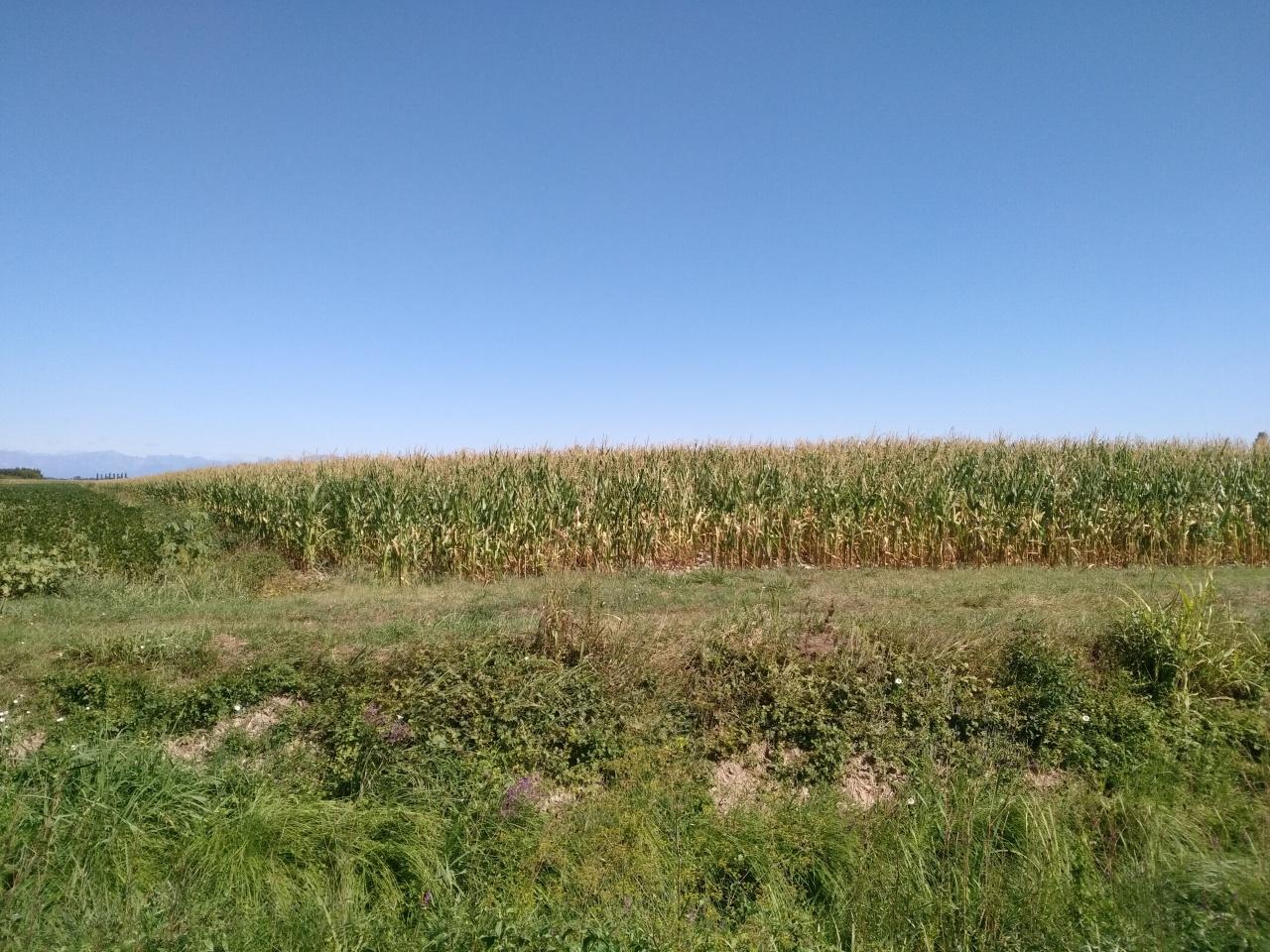 agricolo - agricolo a Teglio Veneto Rif.11691284