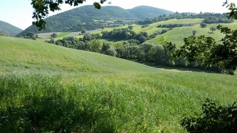 Agricolo - Seminativo a Santo Stefano, Arcevia Rif.9399833