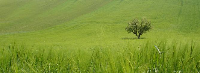 Azienda Agricola in vendita a Petritoli, 30 locali, prezzo € 1.900.000 | CambioCasa.it