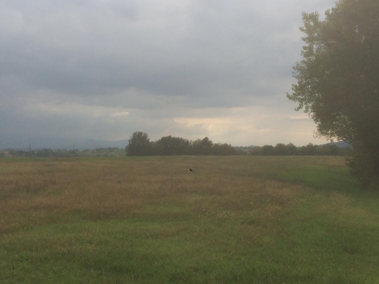Terreno Agricolo in Vendita a Noceto