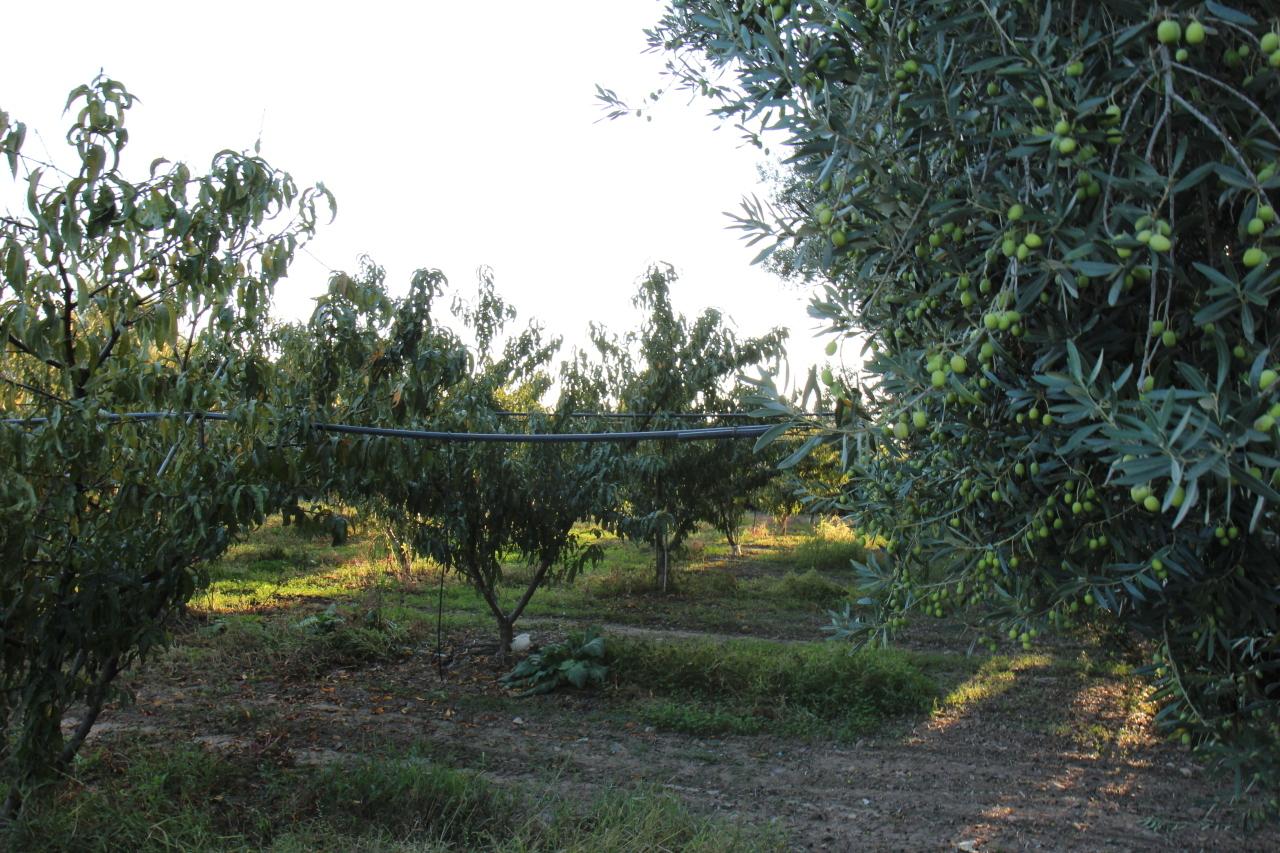 Agricolo - Frutteto a San Sperate Rif.3110766