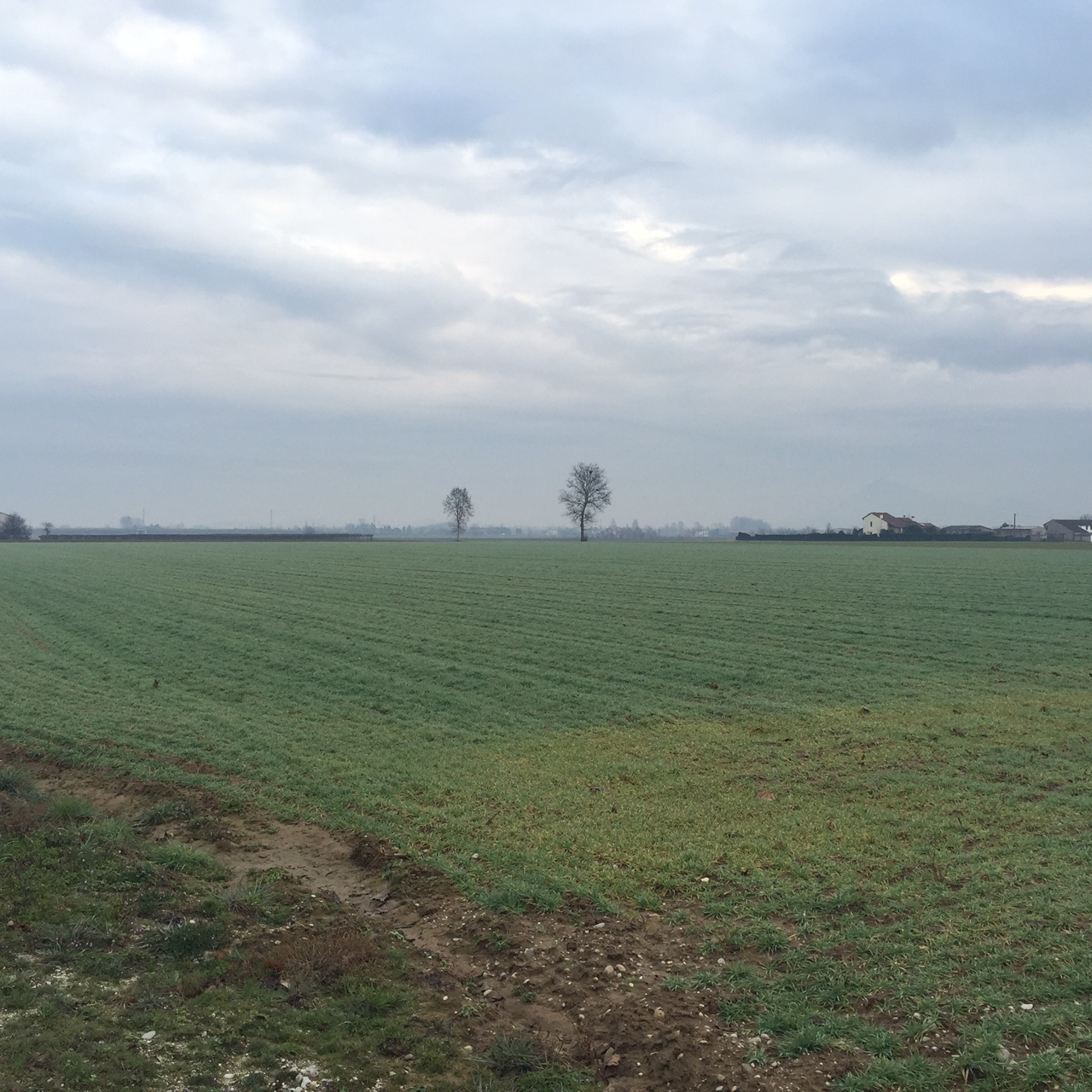Terreno Agricolo in vendita a Lonigo, 1 locali, prezzo € 175.000 | Cambio Casa.it