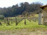 Colonica/casale a Casciana Terme Lari (2/5)