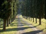 Colonica/casale a Casciana Terme Lari (1/5)
