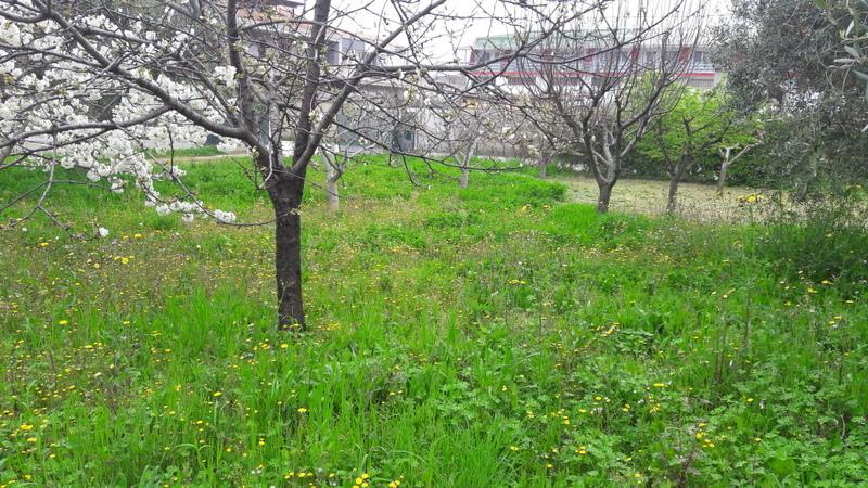 Terreno Edificabile Residenziale in vendita a Tortoreto, 1 locali, Trattative riservate | Cambio Casa.it