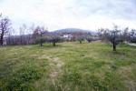 Terreno Turrivalignani  Olivieri-6.jpg
