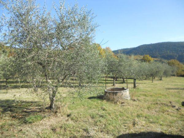 Terreno Agricolo in vendita a Murlo, 9999 locali, prezzo € 75.000 | Cambio Casa.it