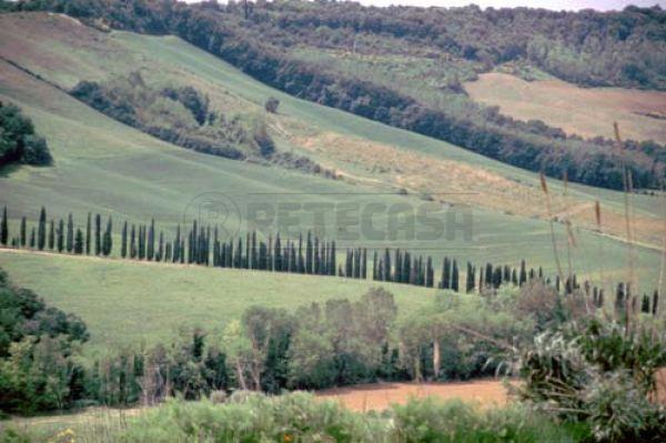 Appartamento in vendita a Monteroni d'Arbia, 4 locali, prezzo € 220.000   Cambio Casa.it