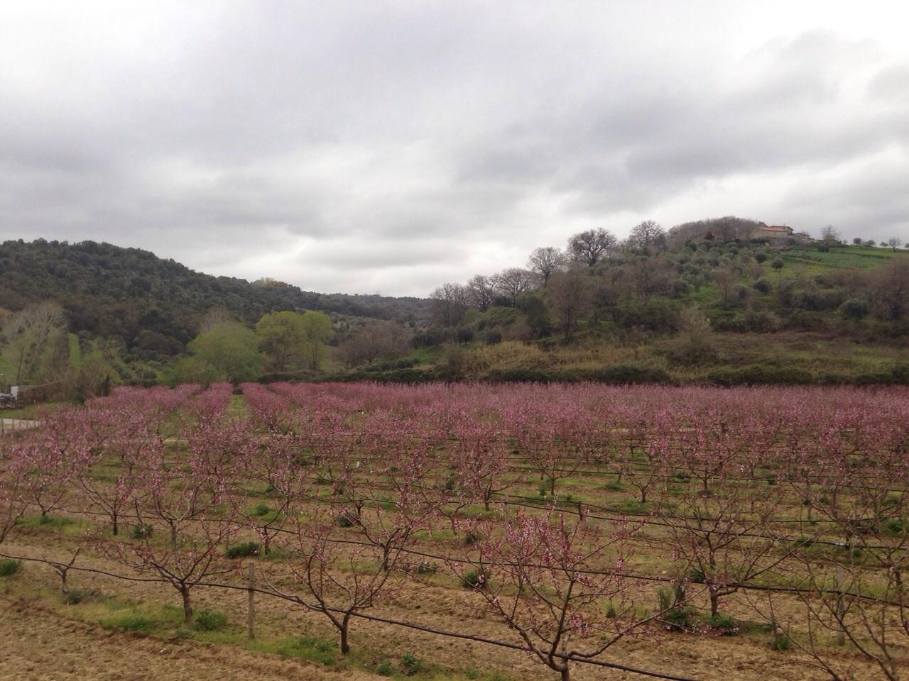 Terreno Agricolo in Vendita a Vibo Valentia