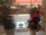 Vendesi bilocale con giardino nuovo da impresa