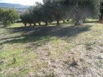 Vendita terreno edificabile Civitanova Marche