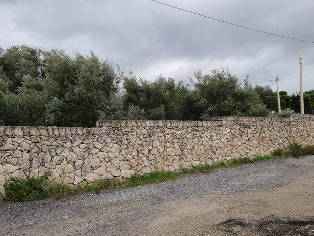 Terreno in vendita Rif. 8801784