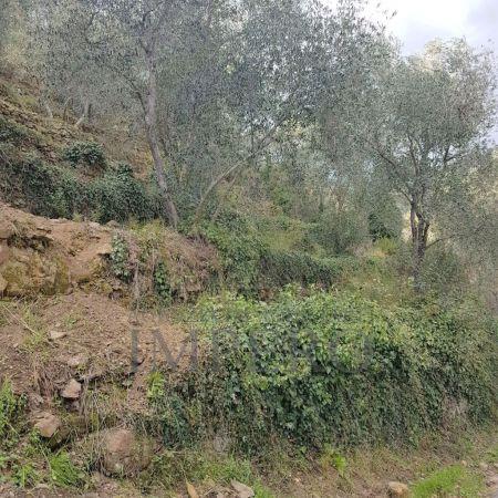 Agricolo, Dolceacqua