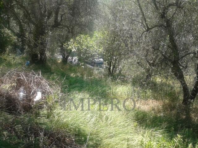 Terreno Agricolo in vendita a Camporosso, 9999 locali, prezzo € 140.000 | PortaleAgenzieImmobiliari.it