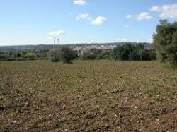 Terreno agricolo in Vendita a Siracusa, zona Arenella-Plemmirio-Fanusa-Terrauzza, 20000 m²