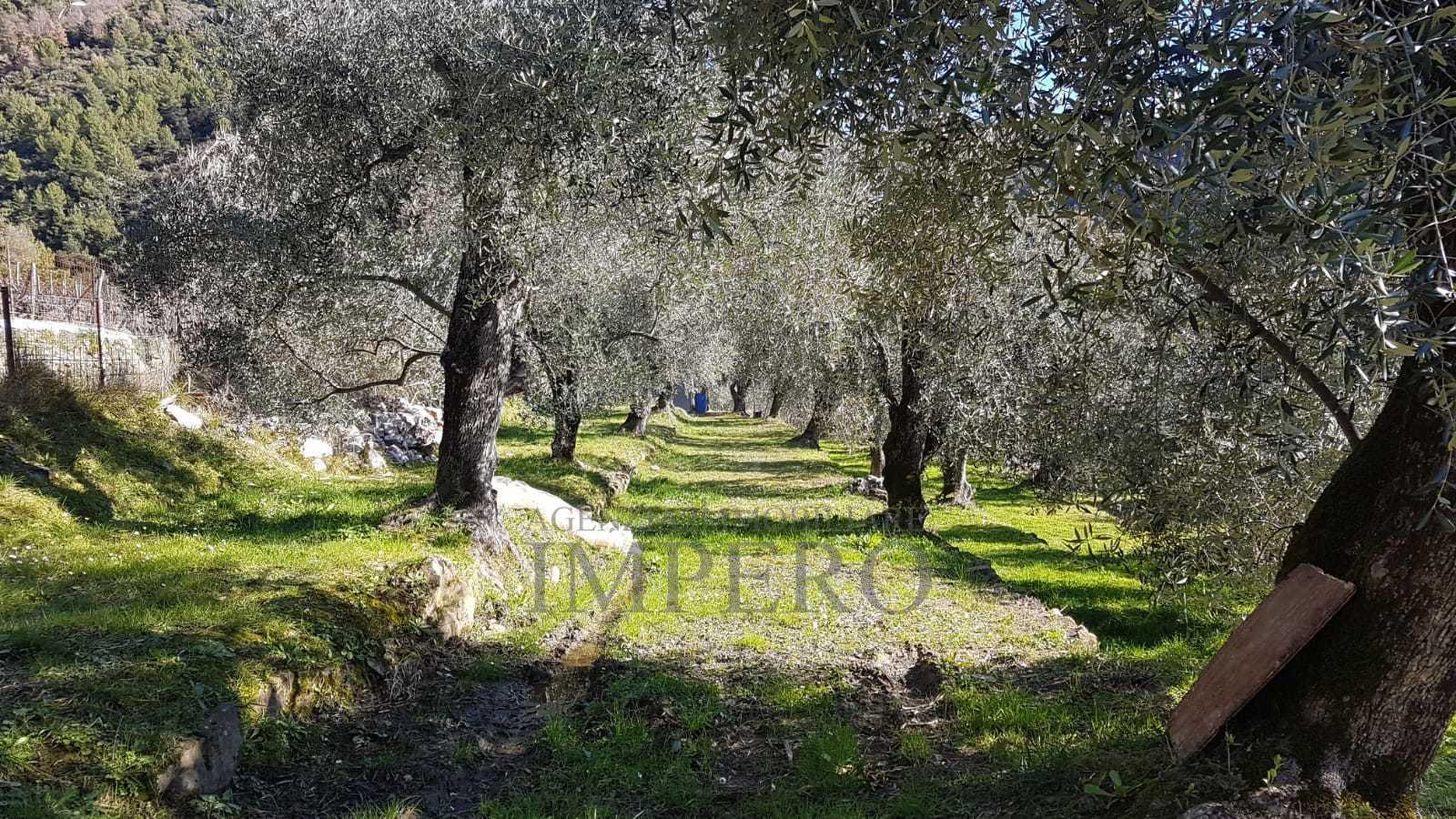 Agricolo, Ventimiglia - Trucco