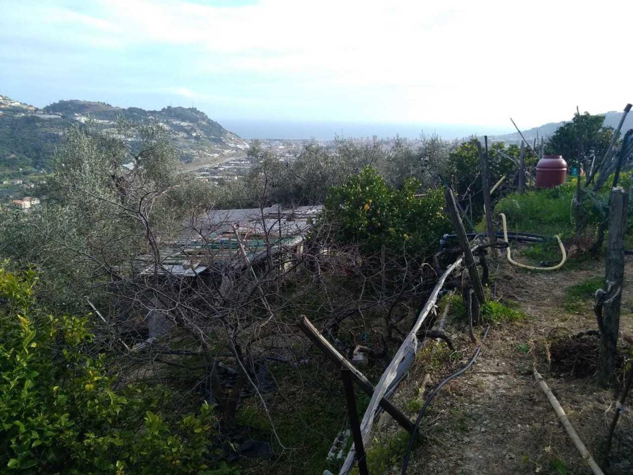 Agricolo - Uliveto a Taggia