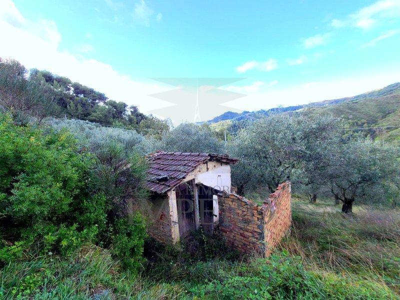 Terreno Agricolo in vendita a Perinaldo, 1 locali, prezzo € 40.000   PortaleAgenzieImmobiliari.it
