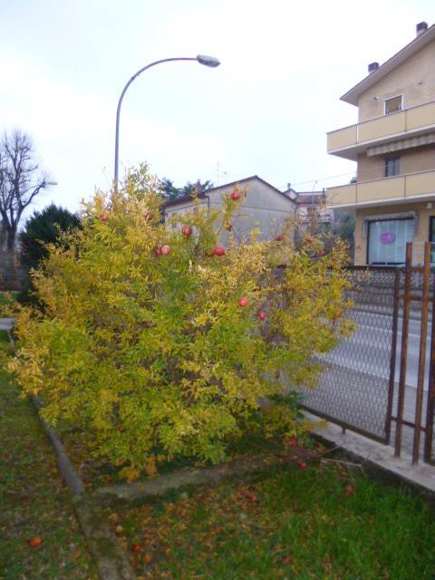 APPARTAMENTO a Macine-borgo Loreto, Castelplanio