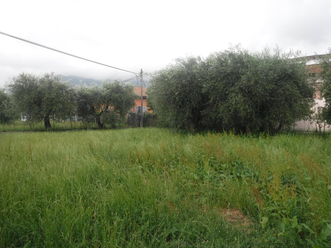 Terreno agricolo a Castelnuovo Magra Rif. 9095936
