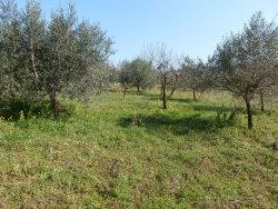 Terreno agricolo in Vendita a Frascati, 78'000€, 5400 m²