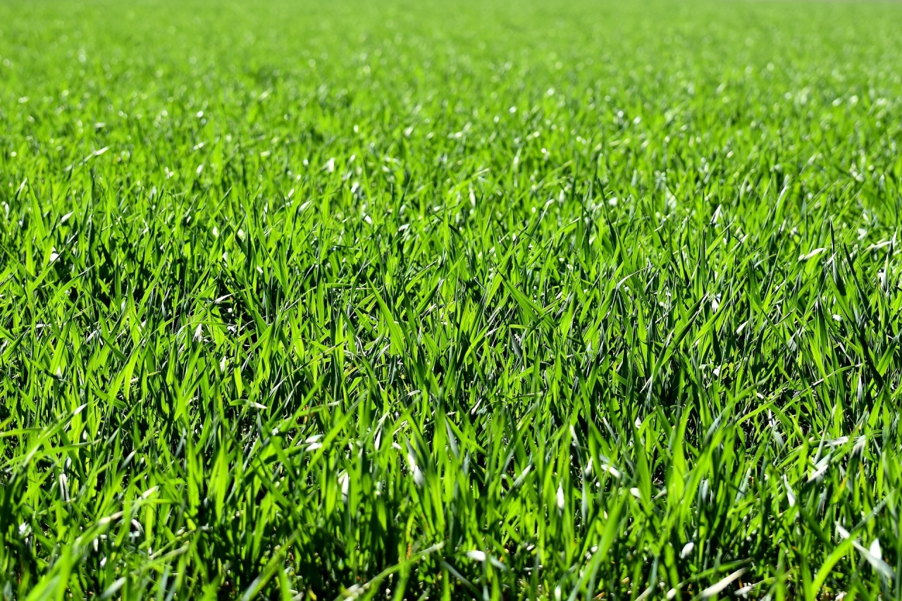 Terreno Edificabile Comm.le/Ind.le in vendita a Verolanuova, 99999 locali, prezzo € 550.000   PortaleAgenzieImmobiliari.it