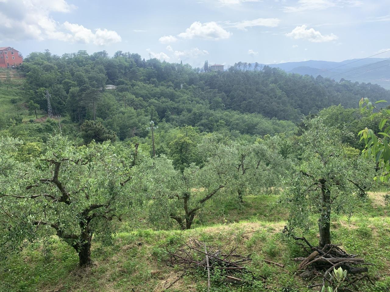 Terreno Agricolo in vendita a Santo Stefano di Magra, 9999 locali, prezzo € 50.000 | PortaleAgenzieImmobiliari.it
