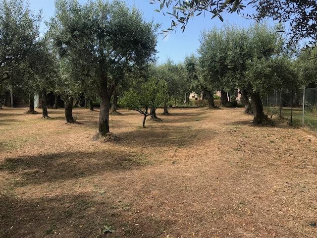 Agricolo - Uliveto a Seravezza Rif. 9373708