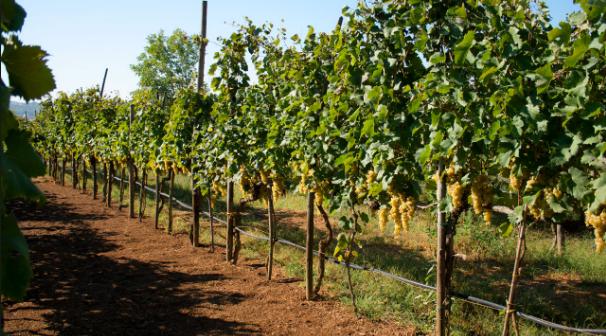 Terreno agricolo a Castelnuovo Magra