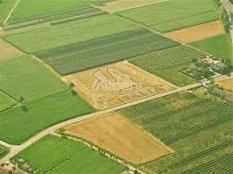 Agricolo a Zona industriale, Arcola