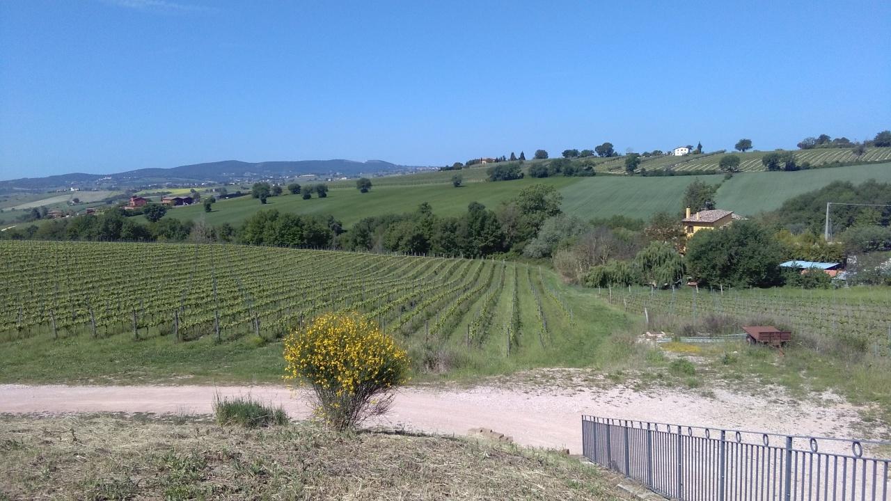Azienda Agricola a Gualdo Cattaneo