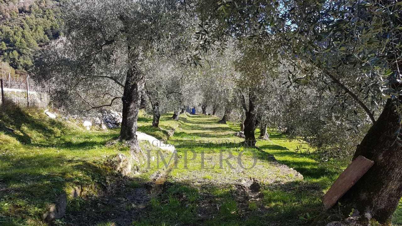 Agricolo - Uliveto a Trucco, Ventimiglia