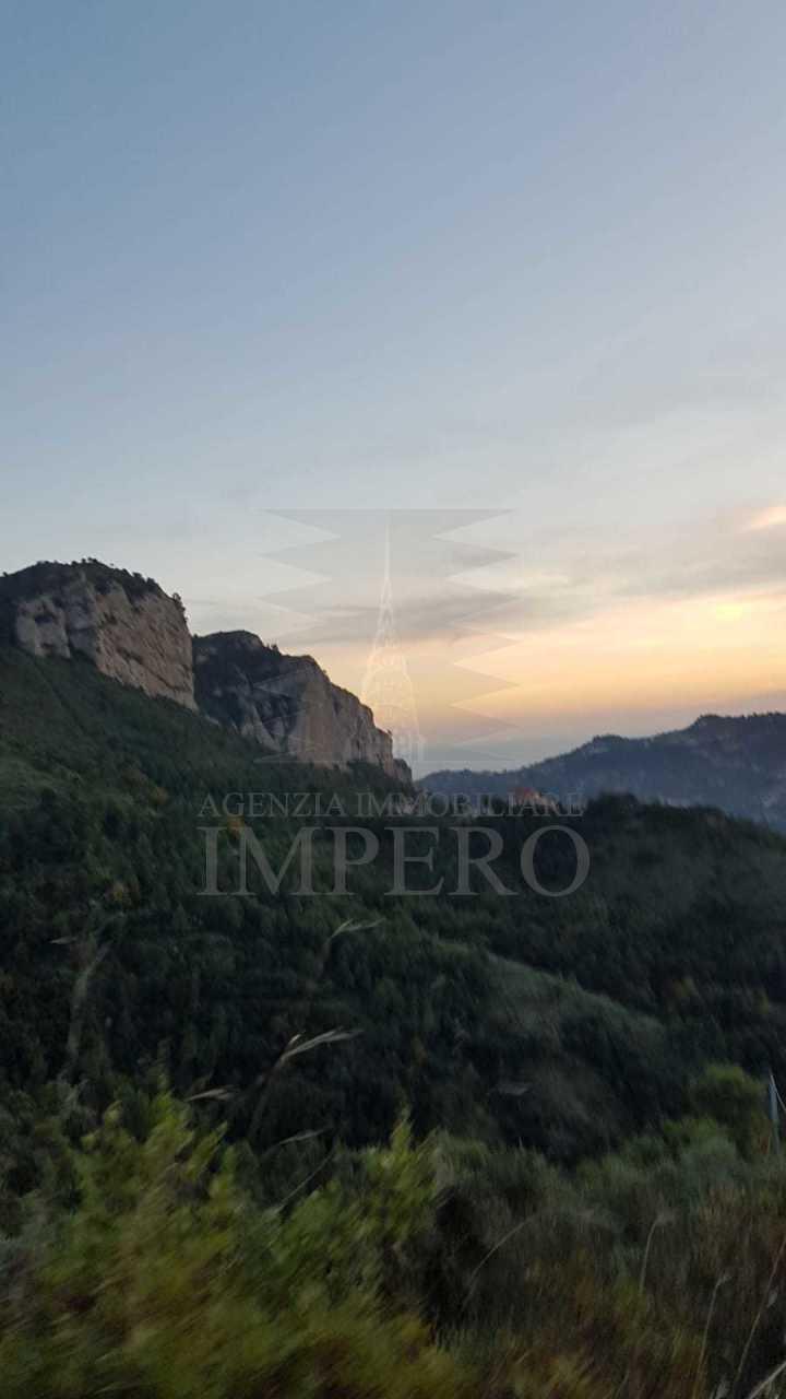 Agricolo - Uliveto a Camporosso
