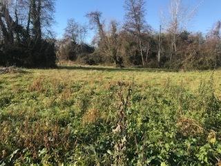 Agricolo - Area verde a Pietrasanta verso capezzano, Pietrasanta