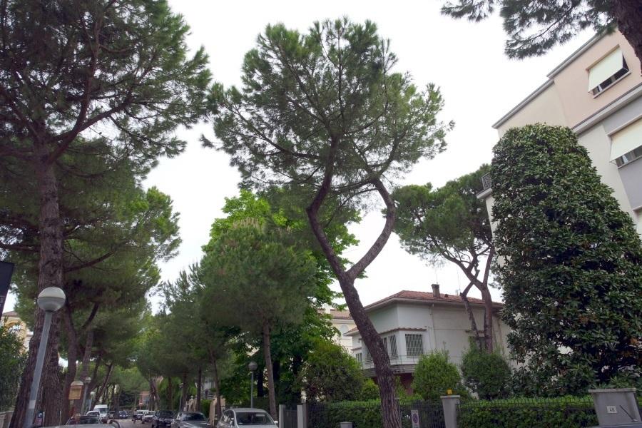 TABACCHERIA a CENTRO, Rimini