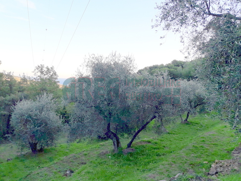 Agricolo - Uliveto a Pairola, San Bartolomeo al Mare