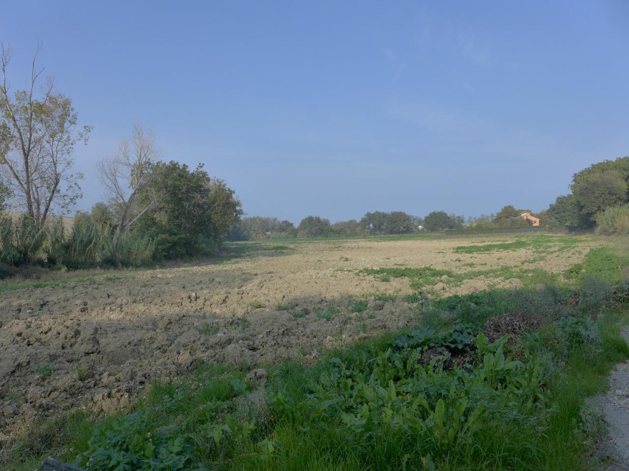 Agricolo - Seminativo a Senigallia