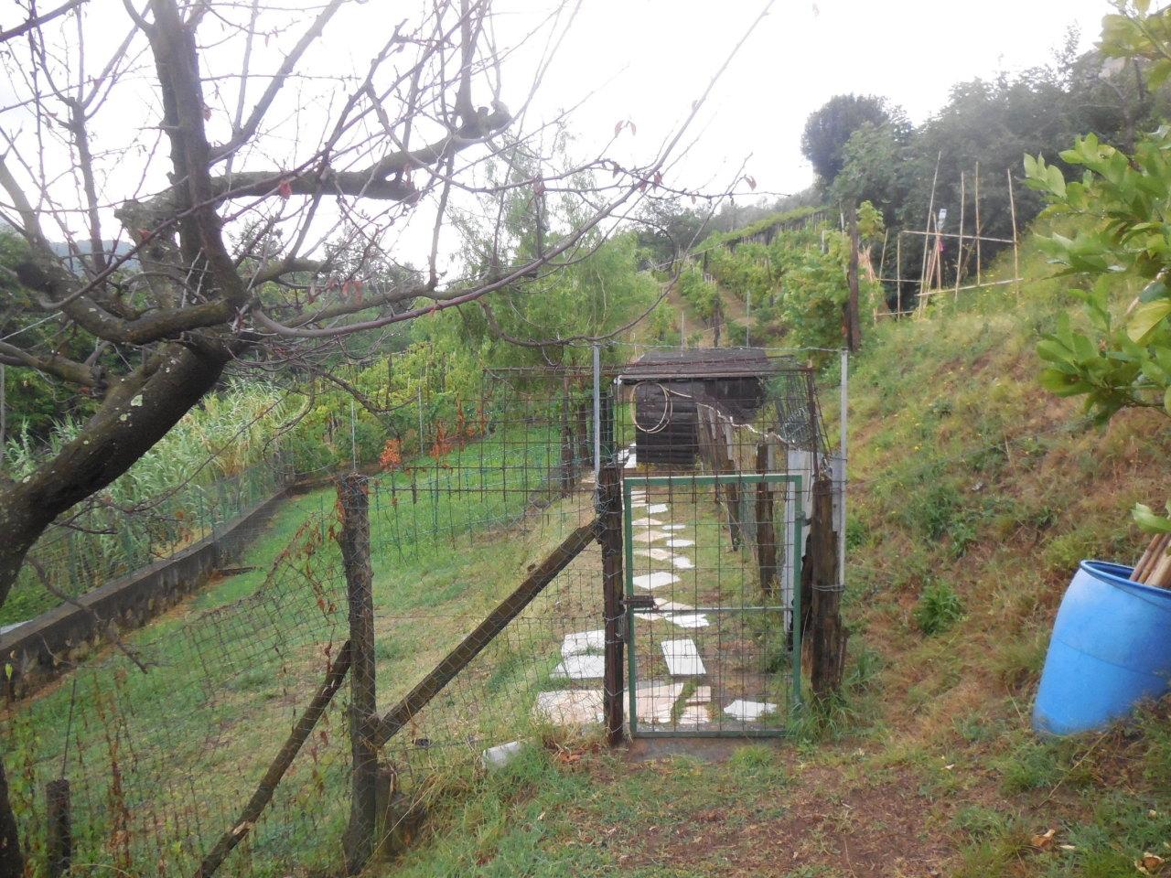 Agricolo a Castelnuovo Magra
