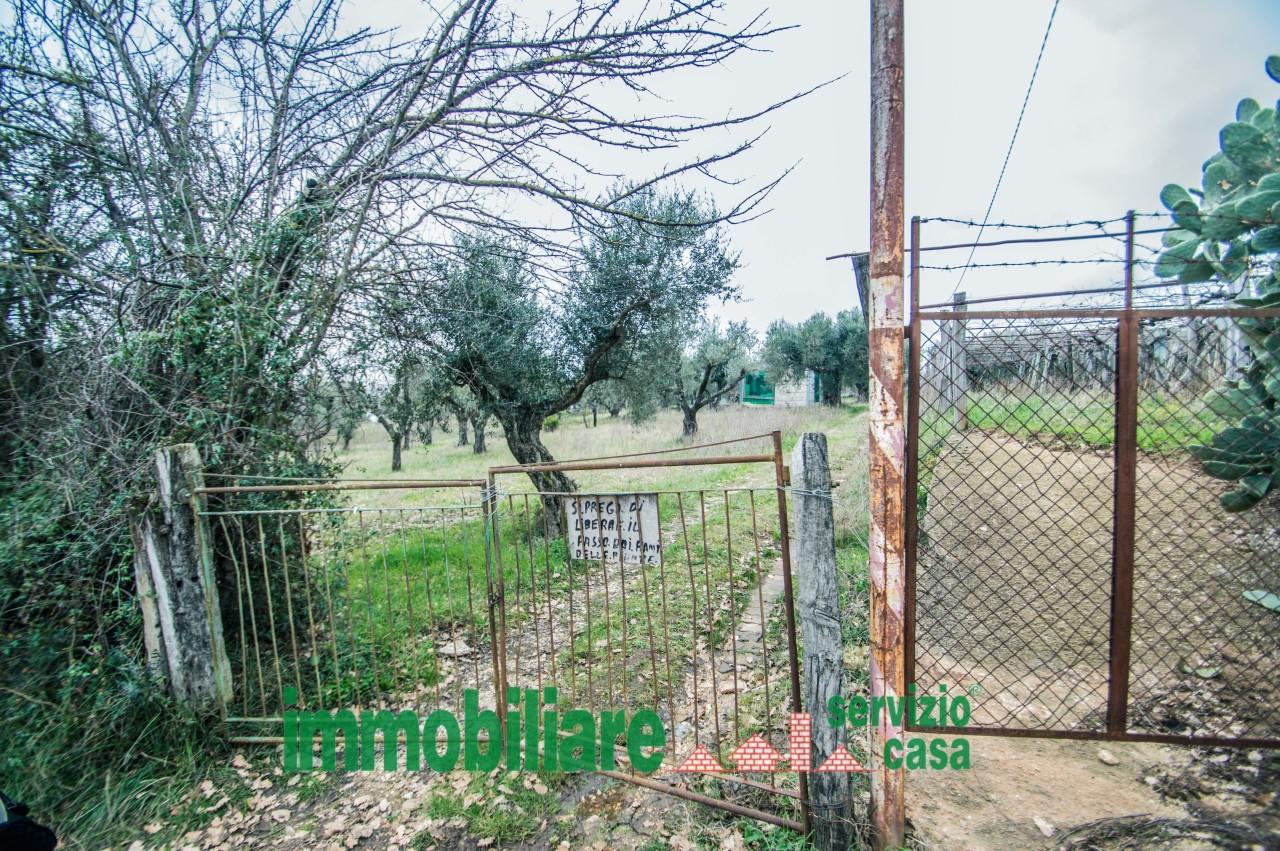 Agricolo - Uliveto a Marcellina Rif. 11034200