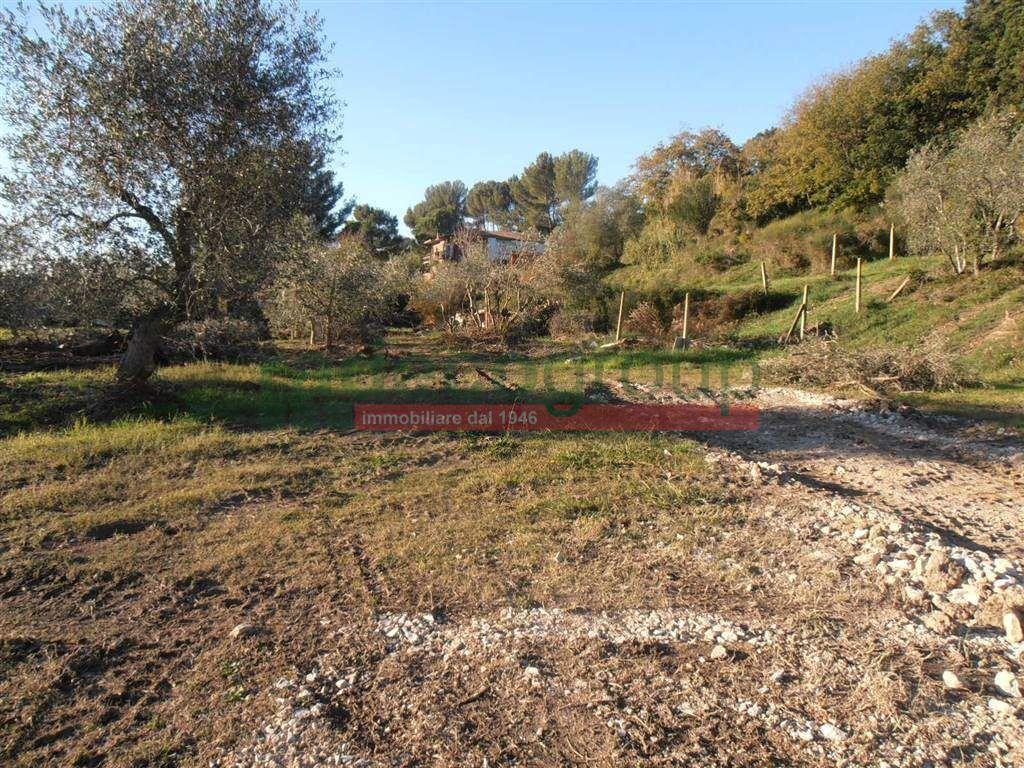 Agricolo a Monterotondo, Livorno Rif. 9679591