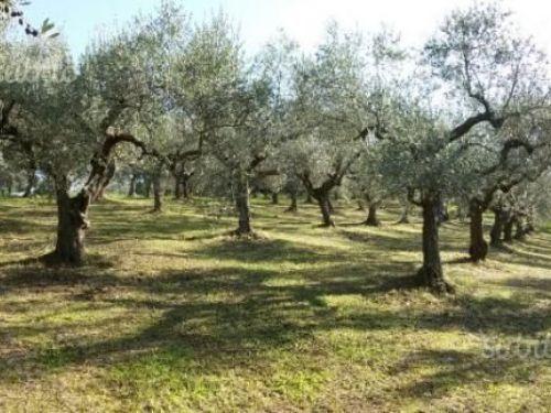 Agricolo a Molino, Sant'Angelo Romano Rif. 6874674