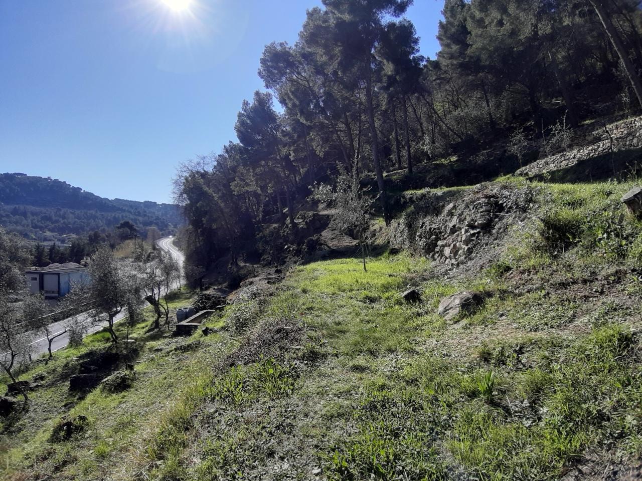 Agricolo - Bosco a San Bartolomeo al Mare