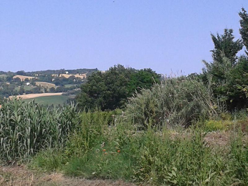 Agricolo  Roncofreddo TERR-22