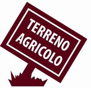 Agricolo - Uliveto a Fonte Nuova Rif. 9958029