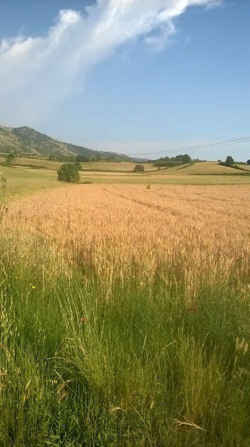 Agricolo - Seminativo a Artena Rif. 7869661