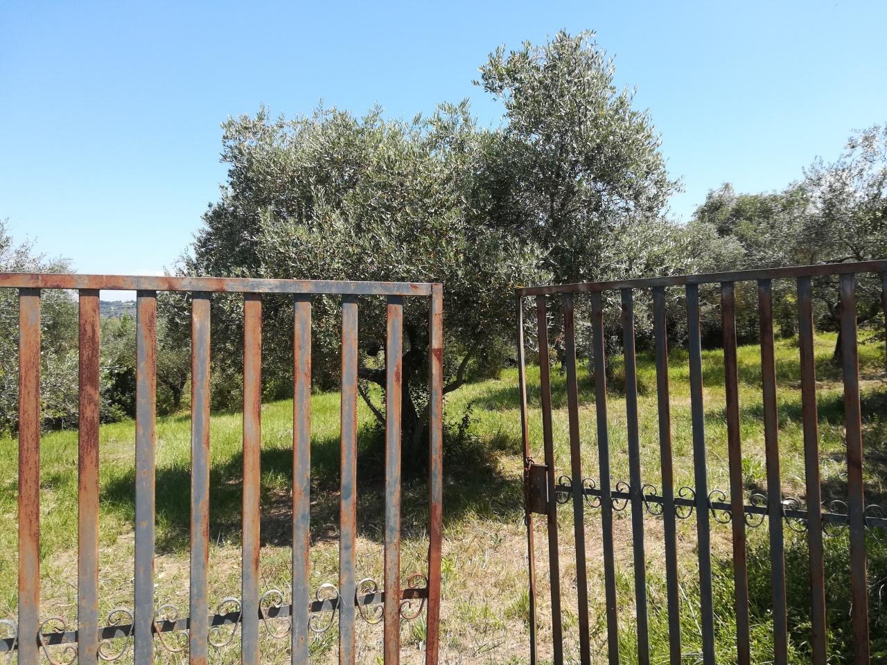 Agricolo - Uliveto a Sant'Angelo Romano Rif. 8226655
