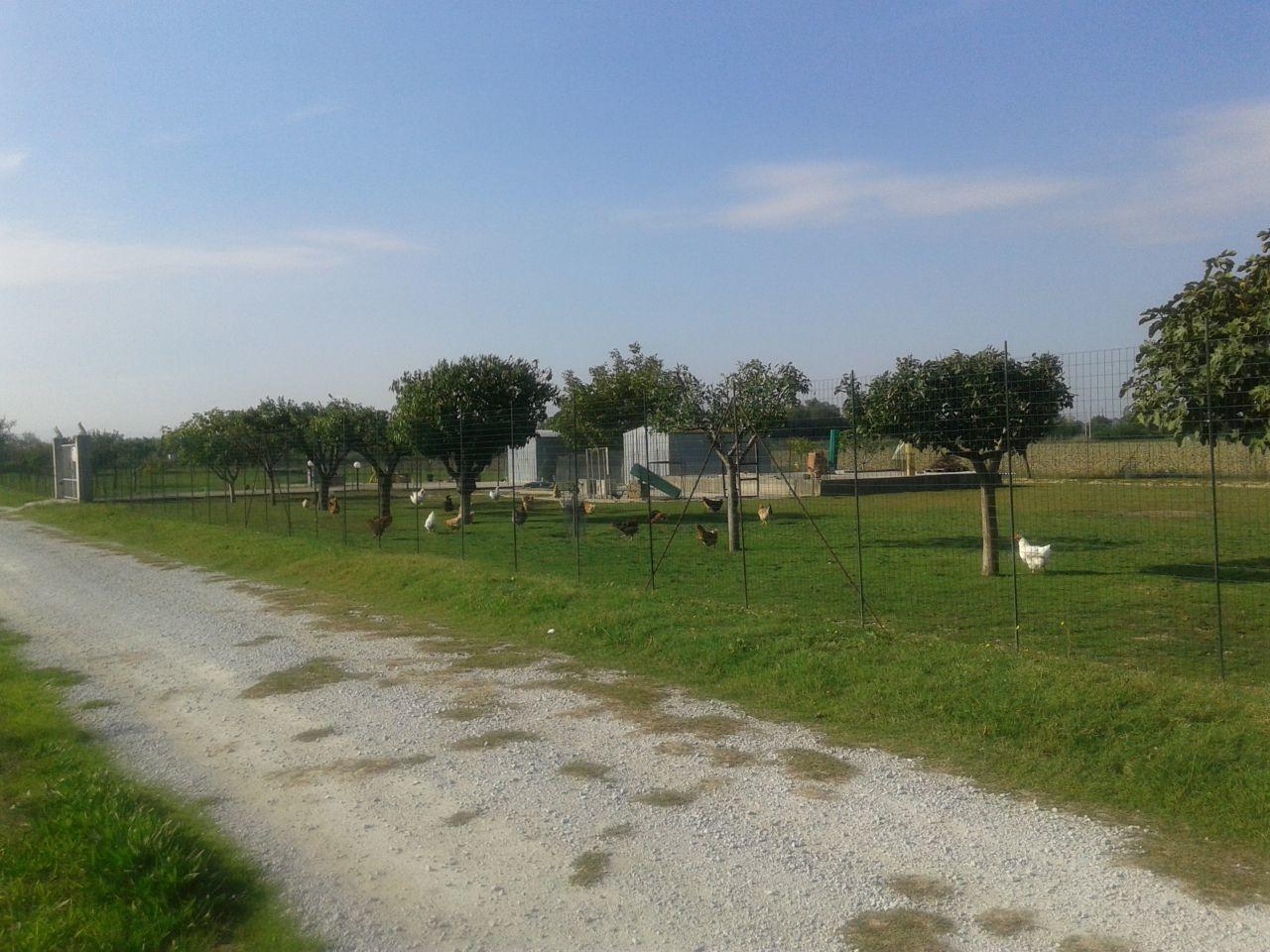 Agricolo a Cesenatico Rif. 9374158