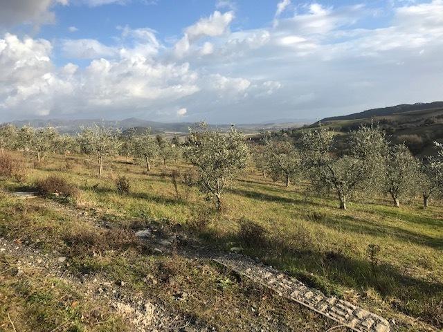 Agricolo - Uliveto a Rosignano Solvay, Rosignano Marittimo