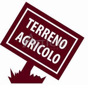 Agricolo a Ceregnano Rif. 10781319