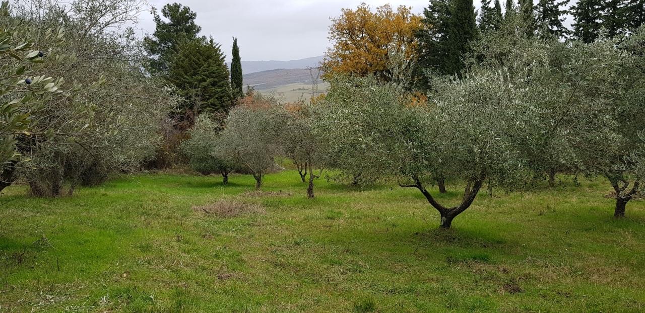 Agricolo - Uliveto a Campiglia D'orcia, Castiglione d'Orcia Rif. 8878463